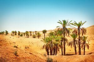 Billet d'avion  payez le meilleur prix pour vous rendre à Tunis