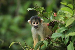 Verloren im Amazonas