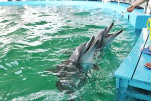 UK tour operators shun animal attractions zoos