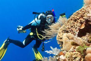 VIDEO Scuba Diving in Hurghada