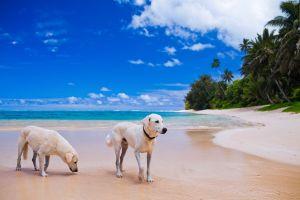 croacia viajes perros mascotas playas