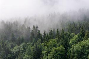 Le pays qui contient le plus d'espèces d'arbres au monde est... le Brésil