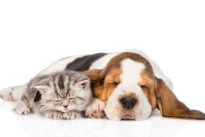 taiwan vieta il consumo della carne di cane e gatto