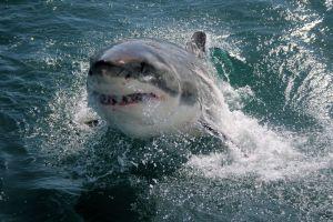 Une touriste a survécu à une attaque de requin en Nouvelle-Zélande