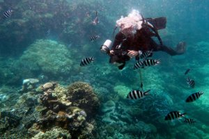 scuba diving best destinations in the world