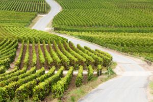places to go wine lovers guide to France