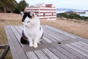 tashirojima, isla japonesa de los gatos