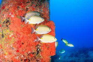 Aqaba turismo Giordania sulla costa del Mar Rosso