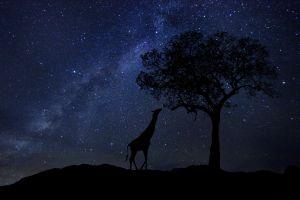destinations cape of good hope south africa astronomy star gazing
