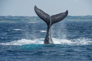 tenerife excursiones ballenas y delfines