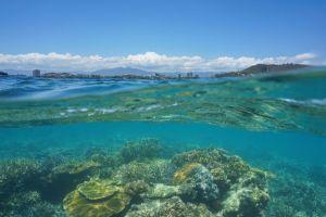 investigacion super corales en nueva caledonia han fascinado a los cientificos