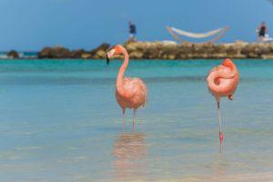 conoces la situacion de estos flamencos en esta isla del caribe venezuela