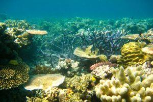 56 milliards de dollars, c'est le prix de la grande barrière de corail en Australie