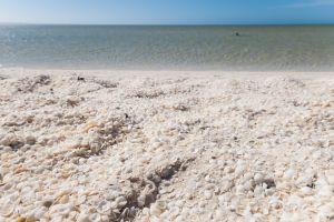 Exploring Australia's Shell Beach