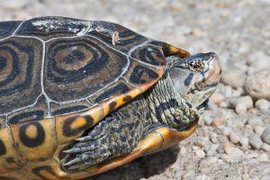 unas tortugas en la pista del aeropuerto jfk causan retrasos en los vuelos