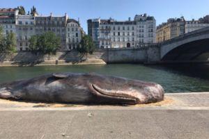Une baleine échouée à Paris