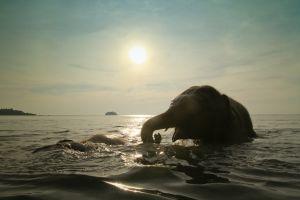 Sri Lanka : deux éléphants échappent à la noyade