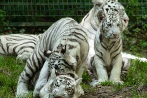 World's best zoos