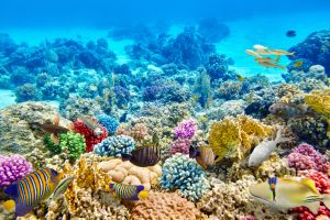 Great Barrier Reef: new regulations to be introduced after tourist deaths