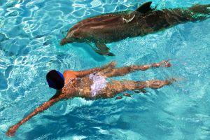 Mort d'un dauphin en Espagne à cause des touristes