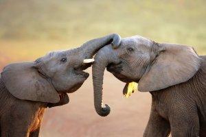 Haute-Vienne la maison de retraite pour éléphants se concrétise