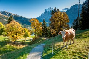 Alpenguide Österreich