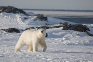 Norway fines tour group for scaring polar bear