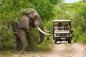 Cinco destinos para disfrutar de un auténtico safari en Sudáfrica