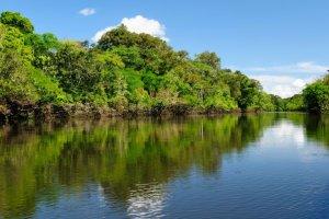 Le Brésil abandonne son projet d'exploiter l'Amazonie