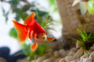Fish become friends for lonely hotel guests