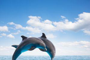 verirrender junger Delfin