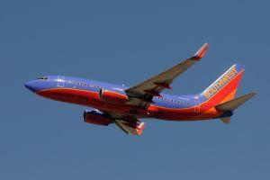 Southwest Airlines vole au secours des animaux orphelins