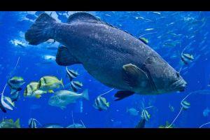 el oceanario de lisboa portugal vuelve a ser elegido el mejor acuario del mundo