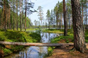 Finland celebrates centenary with new National Park