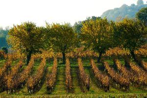 Découvrez la Lombardie, région festive et gourmande