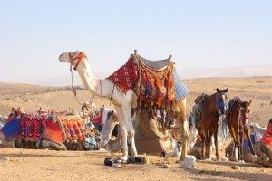 beduinen völker zwischen diskriminierung und faszination