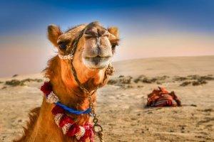 marte nuova colonia nel deserto dubai  per gli scienziati