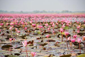 Entdecken Sie 10 rosa Landschaften