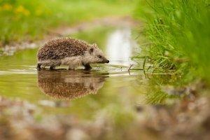 Adorable hedgehog has 200k followers on Instagram