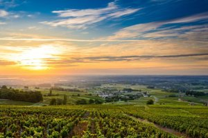 Another blow for France's vineyards