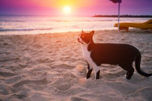 Man quits job to travel across Australia with his cat