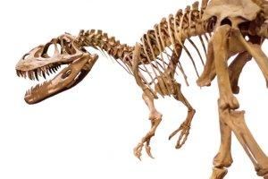 Une nouvelle espèce de dinosaure géant laisse des empreintes de son passage sur Terre