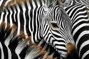 tesoros naturales Kenia