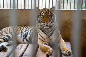 Ireland to ban wild animals from circuses
