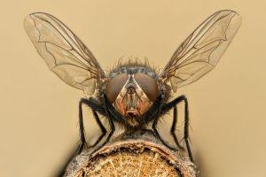 Fin du gaspillage alimentaire grâce à une mouche
