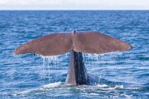 Walfang schreckt TUI Cruise ab