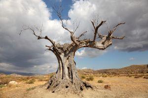 Wasserknappheit wird zum Problem auf der iberischen Halbinsel