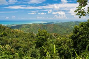 The Most Beautiful Jungle Landscapes in the World