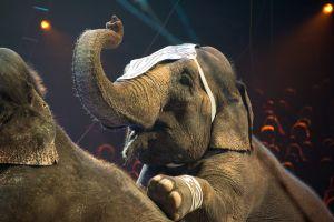 Animaux interdits dans les cirques de Rennes