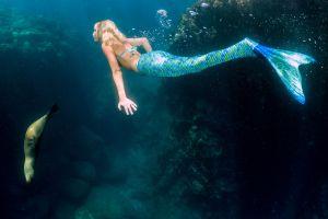 Floride  un parc national recherche des sirènes